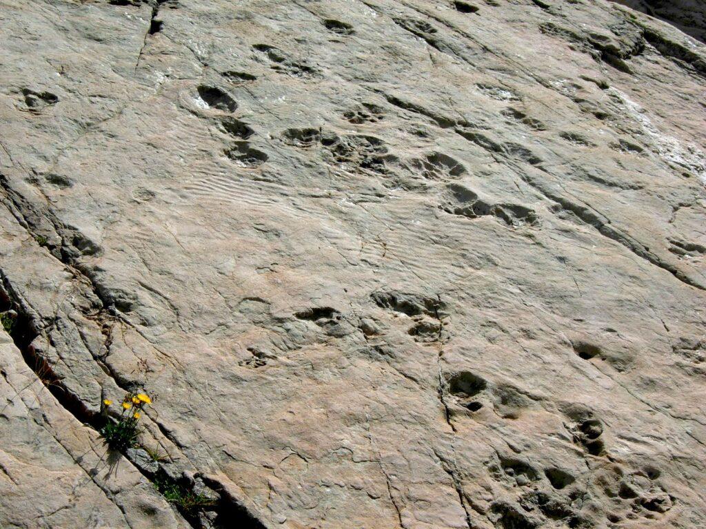 Impronte di dinosauri nella conca du Vieux Emosson.